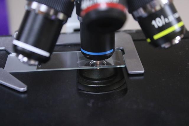 Animal Medical Clinic of Chesapeake, 921 Battlefield Blvd, Chesapeake, VA 23320 offers Laboratory Services