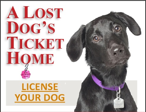Animal Medical of Chesapeake, 921 Battlefield Blvd, Chesapeake, Va 23320 offers Chesapeake City Licenses